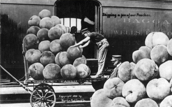 The peaches on this postcard were created by combining two different pictures, but the altered picture conveys the popular notion that Wells Fargo shipped many surprising foods. Photo Credit: Wells Fargo Corporate Archives